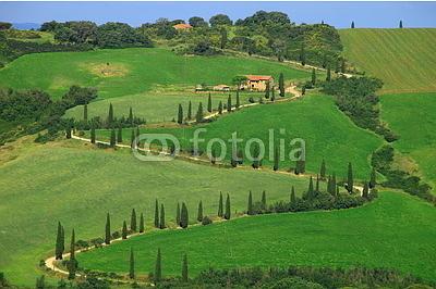 Zypressenallee, La Foce, Val d Orcia, Toskana, Italien