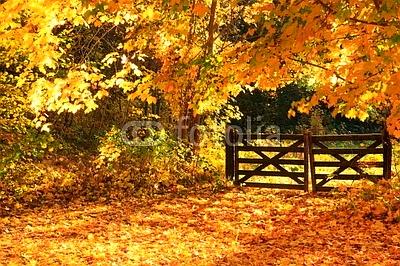 Weidezaun Waldweg Herbstlaub Laubfärbung Waldboden