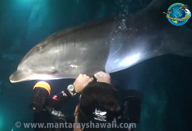Delfin Rettung