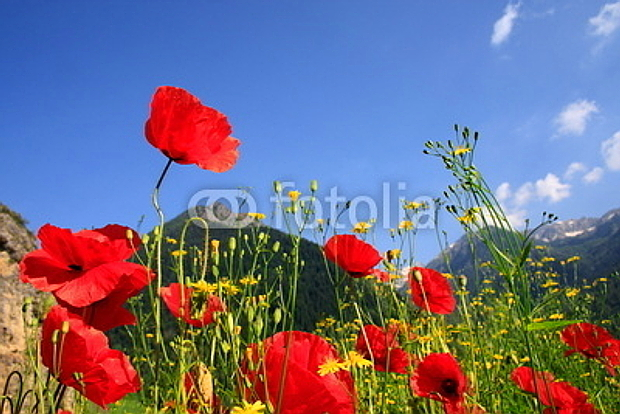 Mohn Bergwiese © Copyright by PANORAMO#13435873
