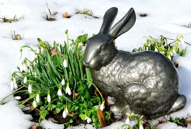 Der wahre Osterhase © Copyright by PANORAMO BlogDSC08161