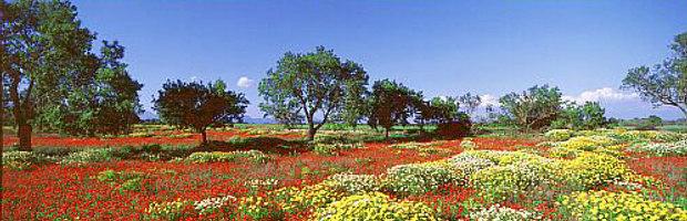 Mallorca © Copyright by PANORAMO BlogMall03341
