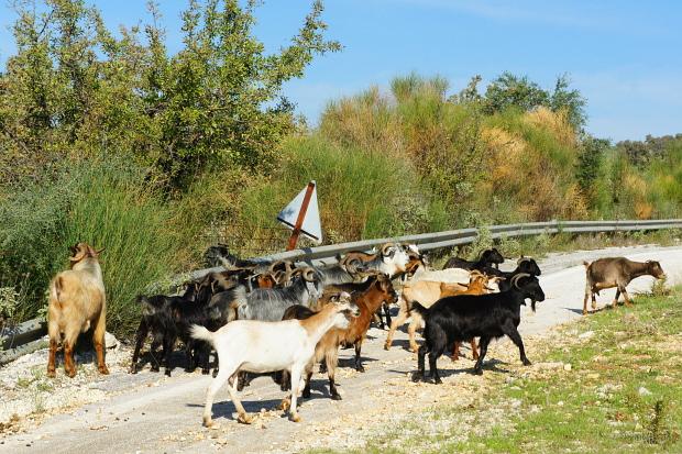 Ländlich Urbau traditionell Epirus Griechenland © Copyright by PANORAMO DSC00508