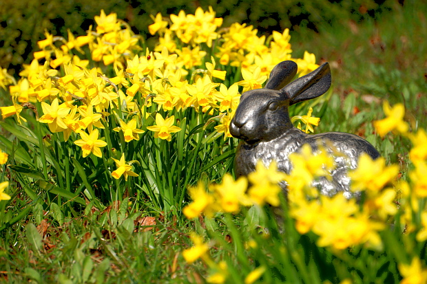 Der wahre Hase © Copyright by PANORAMO BlogDSC1332
