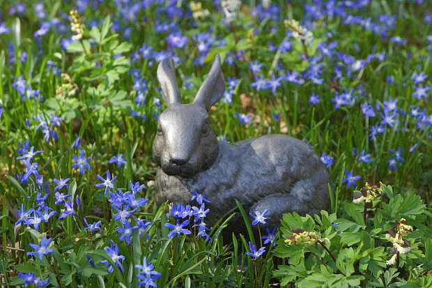 Hase_01347 © Copyright by PANORAMO
