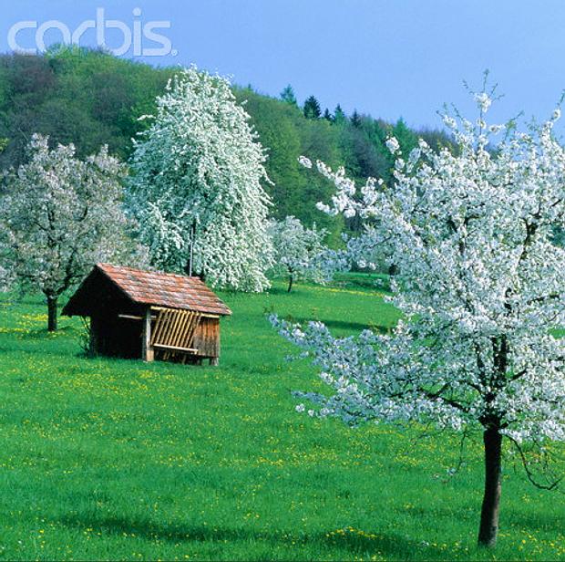 Südlicher Schwarzwald © Copyrights managed by Corbis Images: 42-17363680