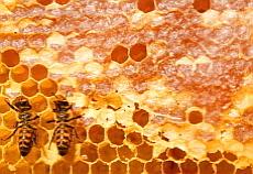 Bienen Honigwaben  © Copyright by PANORAMO Bild lizensieren: briefe@panoramo.de