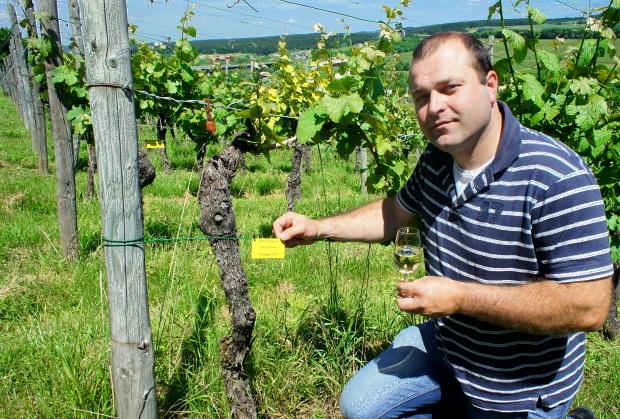 Jean Paul Schott von Rent e Riefstack im Weinberg über Schengen