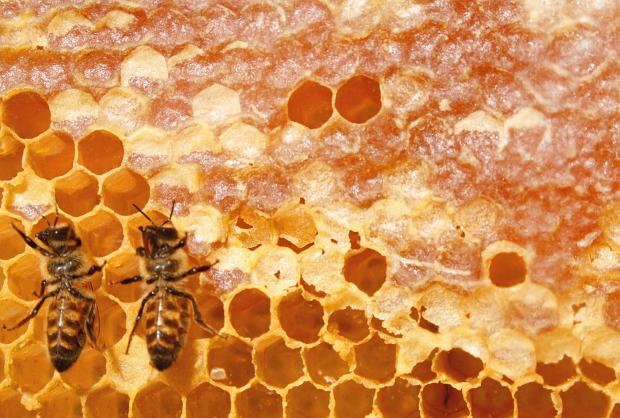 Bienen Waben © Copyright by PANORAMO Bild lizensieren: briefe@panoramo.de