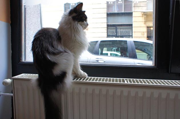 Cat Cafe Budapest © Copyright by PANORAMO Bild lizensieren: briefe@panoramo.de