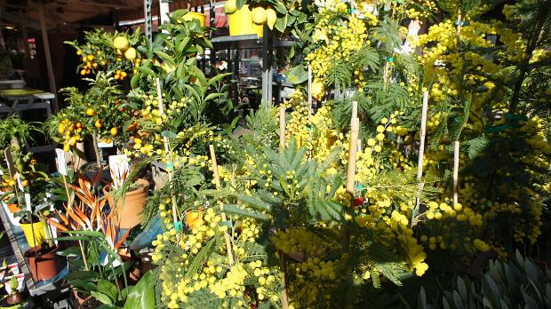 Blumenmarkt an jedem Tag in der Altstadt von Nizza © Copyright by PANORAMO