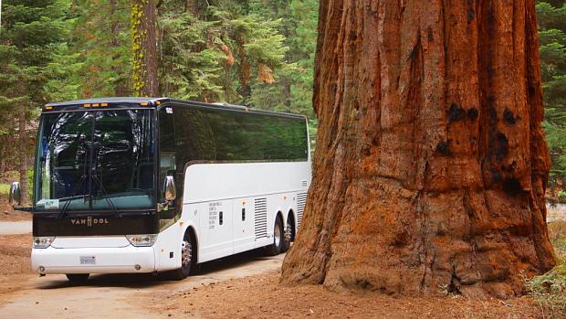 Redwood in Kalifornien © Copyright by PANORAMO.de