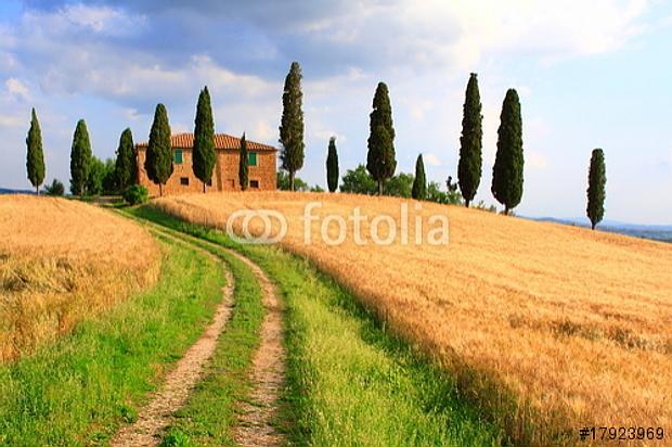 Weg zum Traumhaus mit Zypressen, Toskana Foto ist hier sofort für Ihre Verwendung zum download bereit ab € 3,00 http://de.fotolia.com/id/17923969
