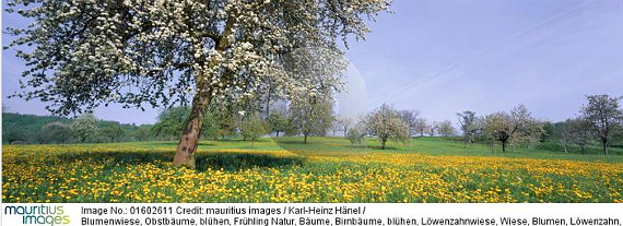 mauritius Bildnummer 01602611 © Copyright Karl-Heinz Hänel / mauritius