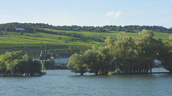 Auen bei Rüdesheim am Rhein Foto © Copyright Karl-Heinz Haenel