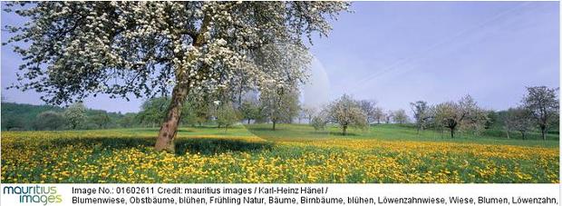 Bildnummer 01602611 © Copyright Karl-Heinz Hänel mauritius images