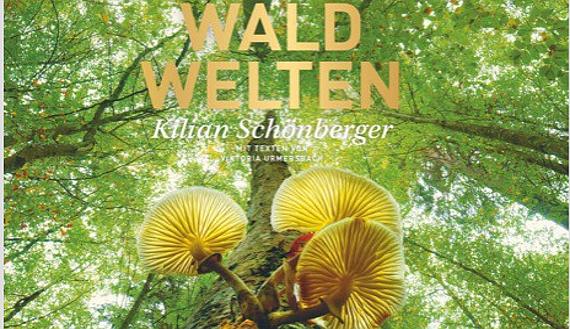 © Copyright Kilian Schönberger - Frederking & Thaler Verlag