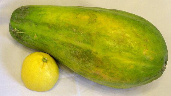 Papaya © Copyright by Karl-Heinz Hänel