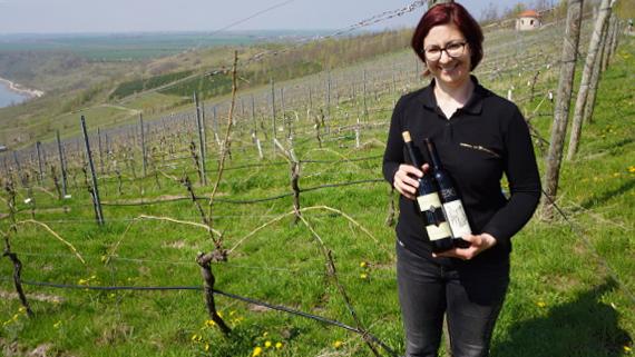 Weinbau am Geiseltalsee Saale-Unstrut © Copyright Karl-Heinz Hänel