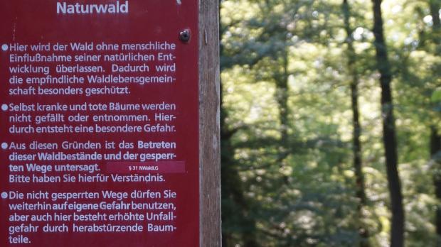 Im Urwald / Lüßwalde © Copyright Karl-Heinz Hänel