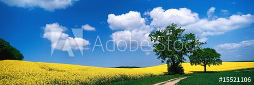 """Foto ist hier sofort für Ihre Verwendung zum download bereit ab € 1,00 <a href=""""http://de.fotolia.com/id/15521106/partner/200519431"""" title=""""http://de.fotolia.com/id/15521106"""" target=""""_blank""""> http://de.fotolia.com/id/15521106</a>"""