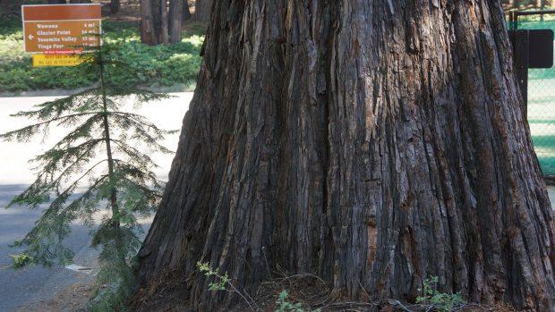 Yosemite-Nationalpark in Californien © Copyright Karl-Heinz Hänel